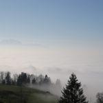 Ein paar Tannen die von Nebel umgeben sind