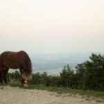 Ein Pony das am Gras fressen ist
