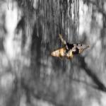 Zwei gelb weisse Schmetterlinge vor einem grauen Hihntergrund