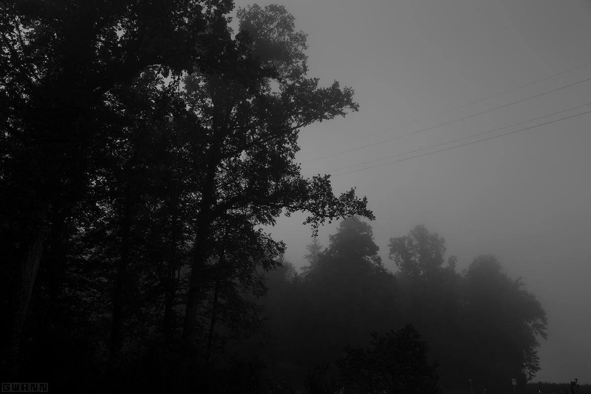 Schwarz-Weiss Foto eines Waldes im Wald im Nebel