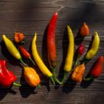 Dreizehn rote, orange und gelbe Chili-Schoten auf einem Holztisch.