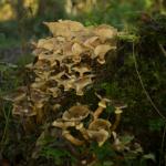 Es ist ein mit Moos und vielen Pilzen überwucherter Baumstrunk.