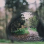 Der Hintergrund ist verschwommen in Braun- und Grüntöne gefärbt. In der Mitte ist ein Spiegel, darin kann man Bäume und einen Waldweg erkennen.