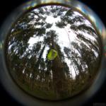Das Bild ist Rund mit einem schwarzen Ramen. In der Mitte ist ein leucht-gelbes dreckiges Reflektorband, das an einem Ast hängt. Rundherum hat es Bäume.
