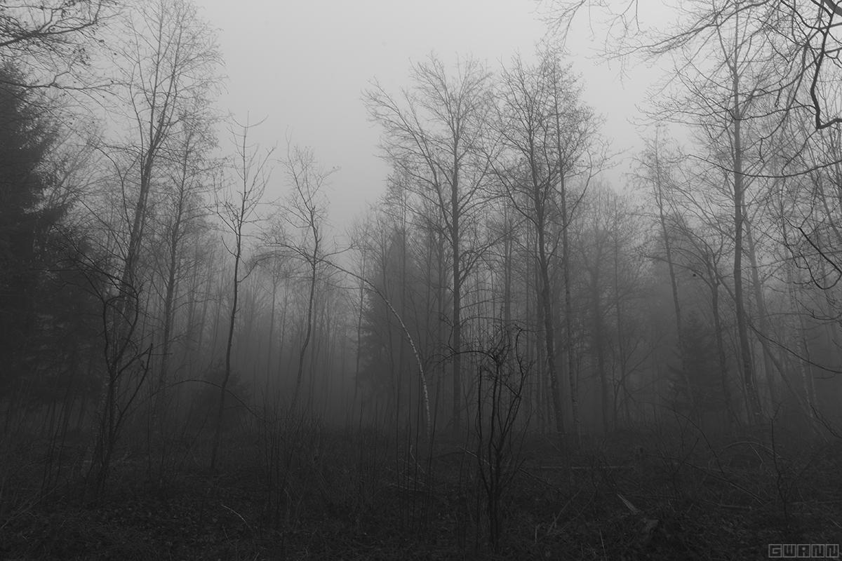 In Nebel gehüllte Bäume eines Waldes. In Schwarz-Weiss gehalten.